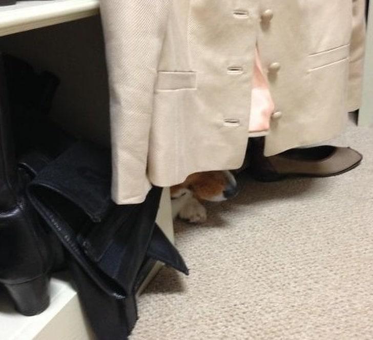собака прячется в шкафу