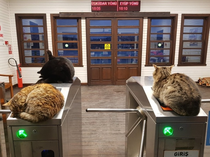 коты сидят на турникете в метро