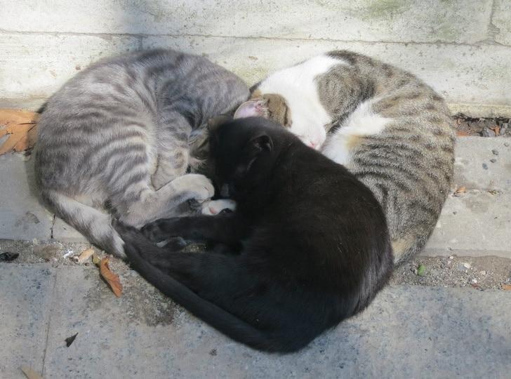 коты лежат сердечком