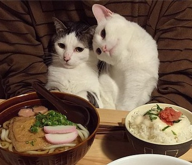 коты сидят за столом