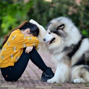 собака утешает плачущую девочку