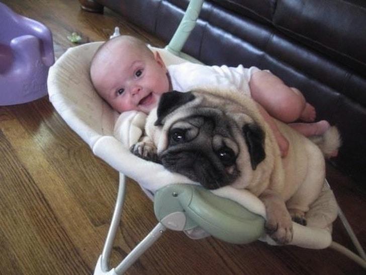 мопс лежит рядом с малышом