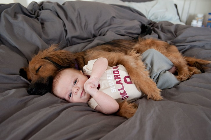 собака спит в обнимку с ребенком
