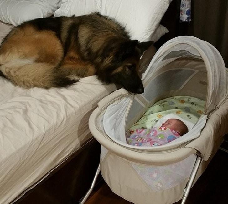 овчарка рядом с ребенком