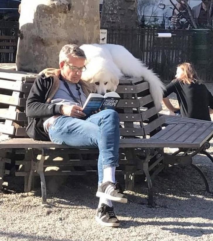 собака читает с мужчиной книгу