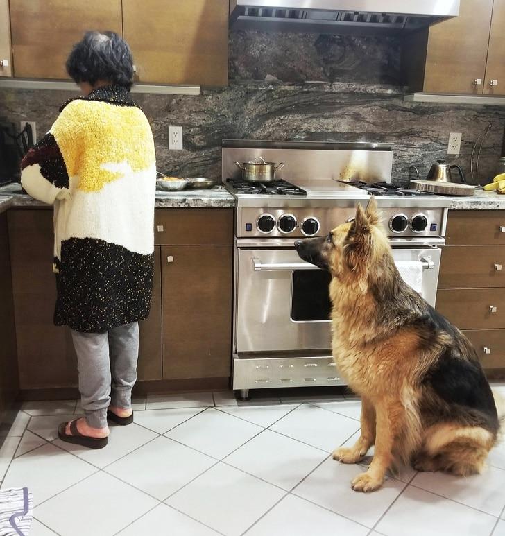 женщина и овчарка в кухне