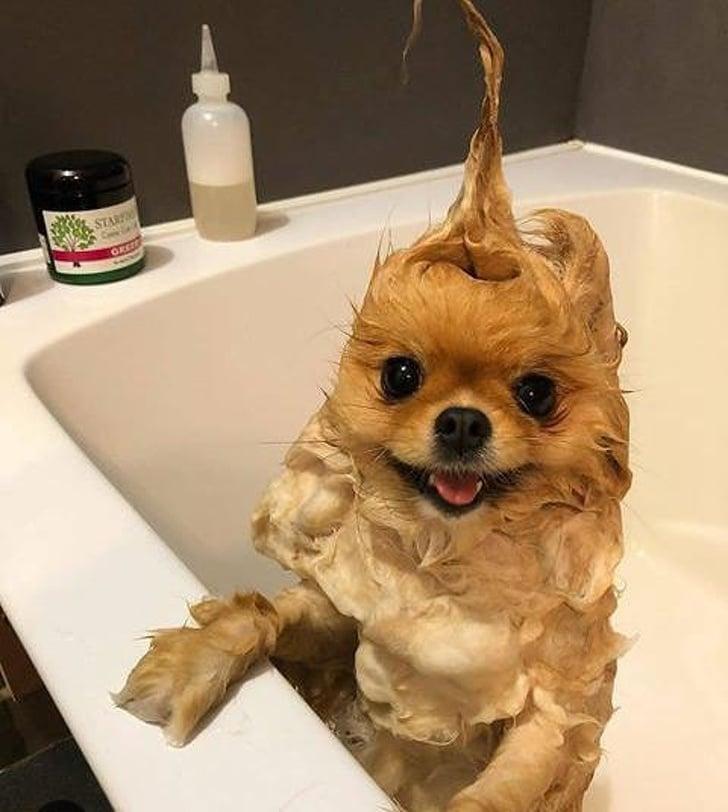 ванна для собаки