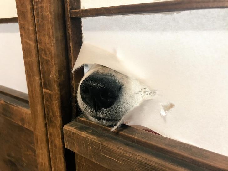 собака сломала дверь