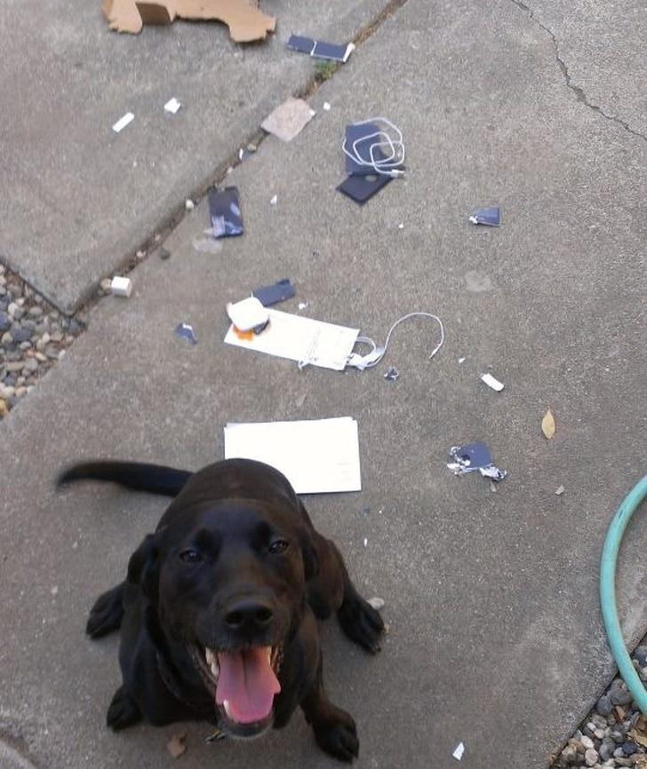 собака сломала телефон