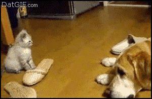 котенок прыгает на собаку