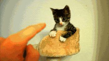 котенок царапается