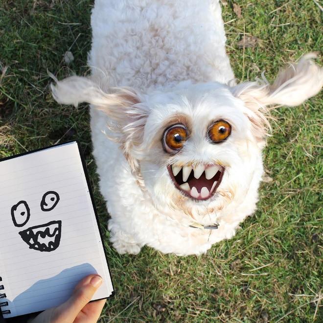 фотошоп собака