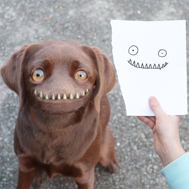 собака фотошоп