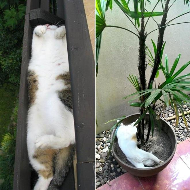 кот отдыхает в вазоне
