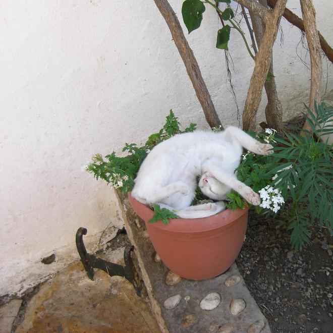 смешной кот в горшке