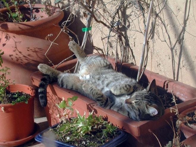 кот греется на солнышке