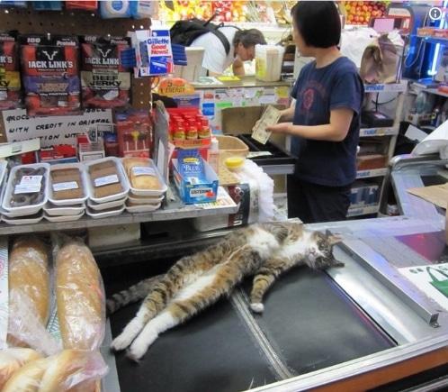 полосатый кот на кассе в супермаркете