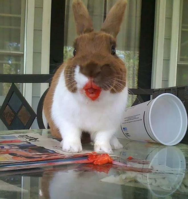 кролик сидит на столе