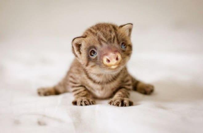 маленький полосатый котенок
