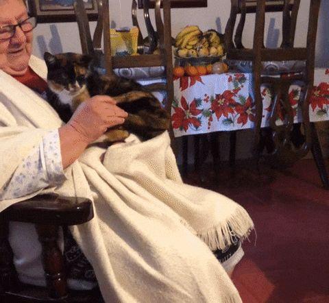 женщина играет с хвостом кошки