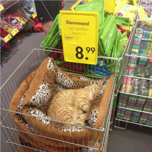 рыжий кот спит в магазинной тележке