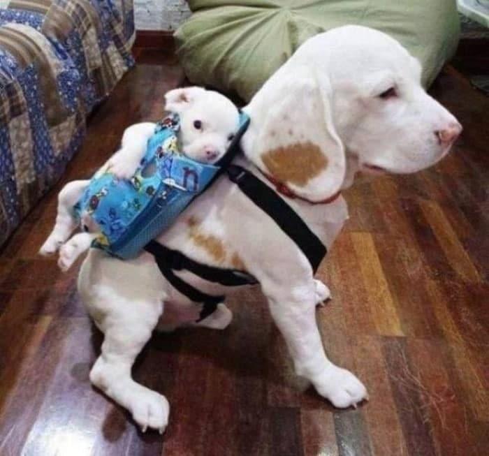 собака и её щенок
