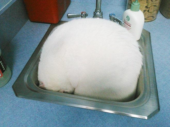 кот улегся в умывальнике