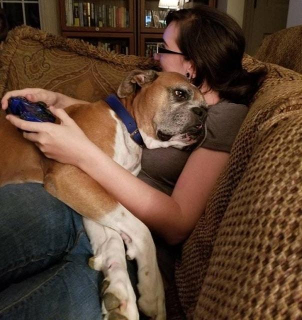 пес лежит на хозяйке