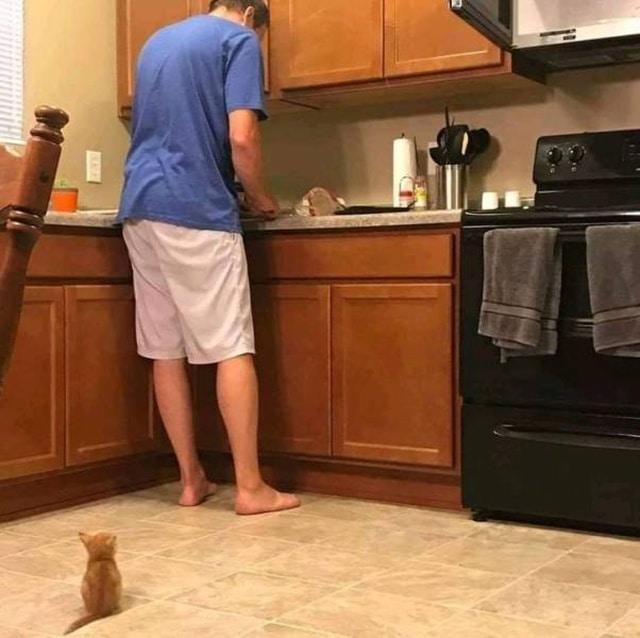 котенок сидит на полу