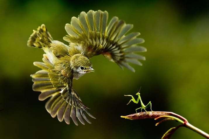 птица и насекомое