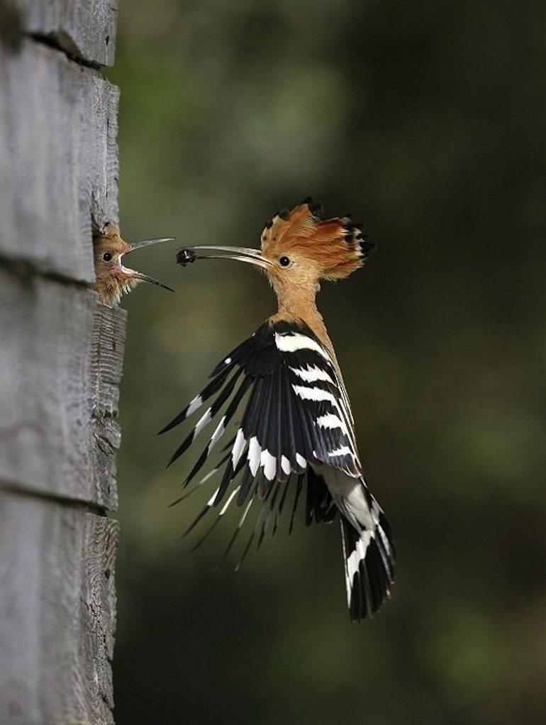 птица кормит своего птенца
