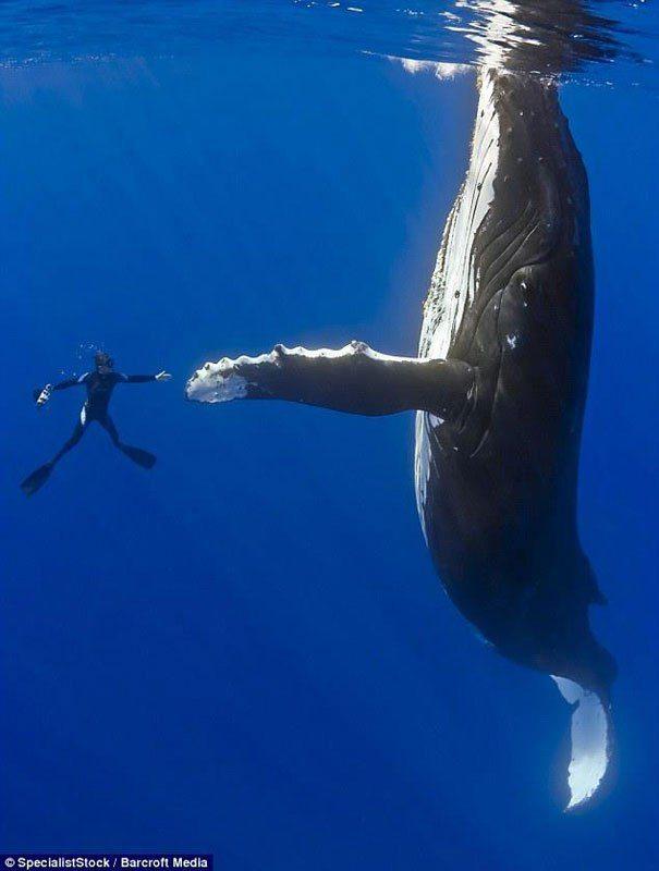 кит и человек