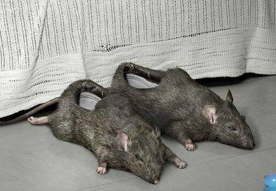 тапочки в форме мышей