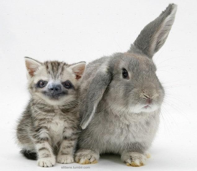 полосатый котенок и кролик