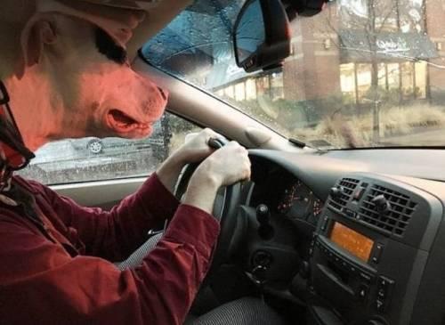 пес ведет автомобиль