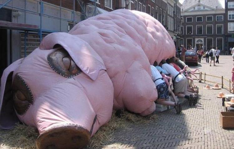 люди и свинья