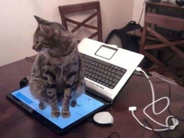 кот сидит на мониторе ноутбука