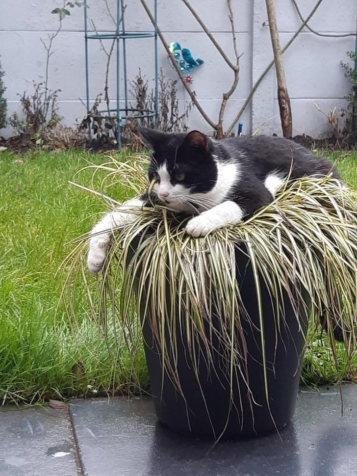черно-белый кот на цветочном горшке