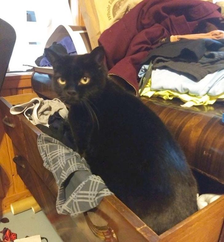 черный кот в ящике с бельем