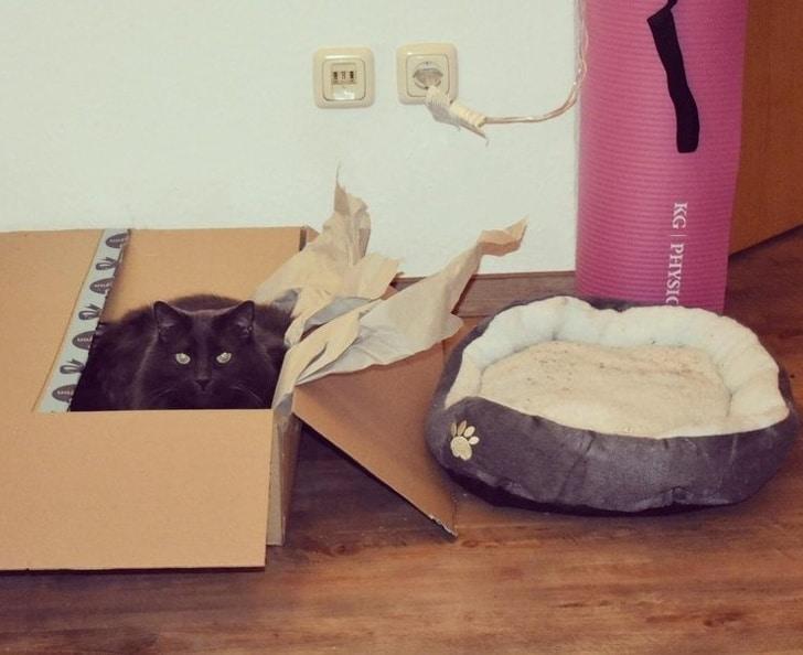черная кошка сидит в коробке