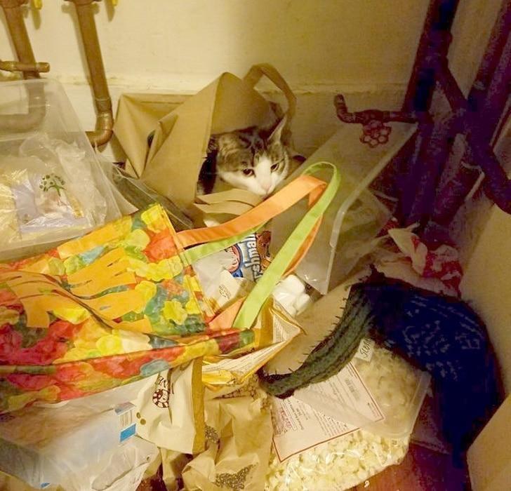 кот среди сумок