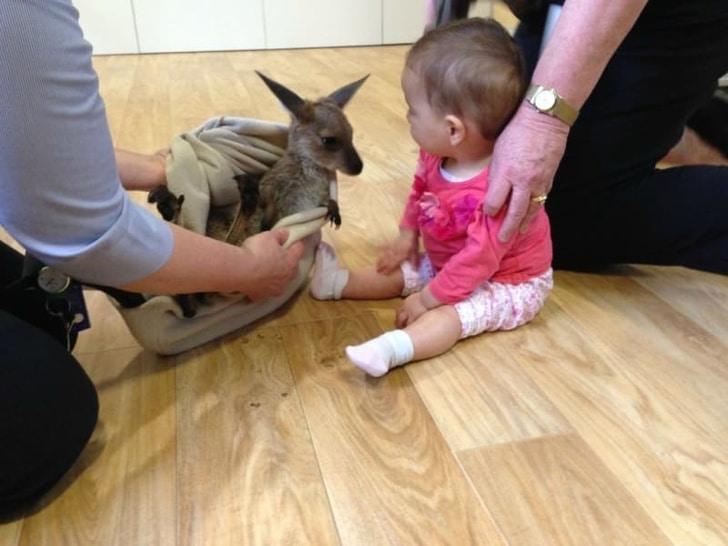 кенгуренок и маленький ребенок