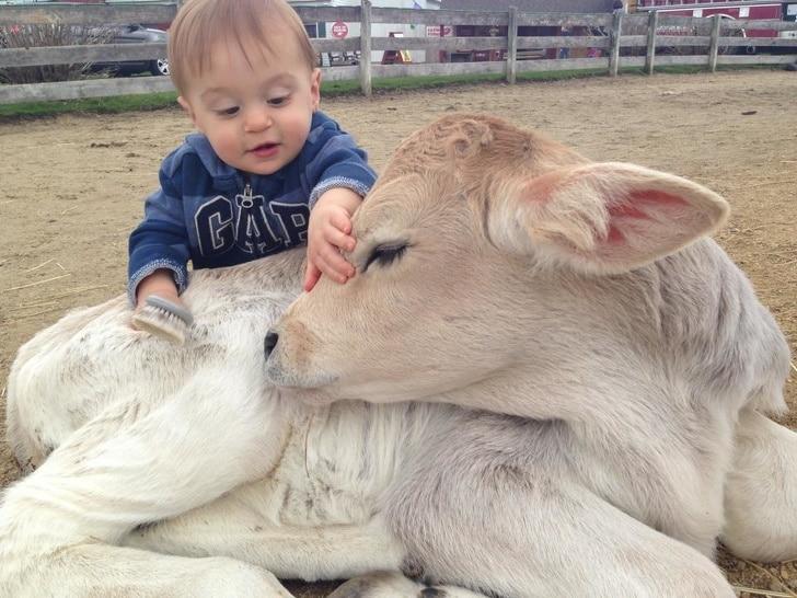 маленький мальчик с теленком