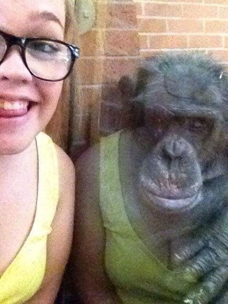 девушка и горилла