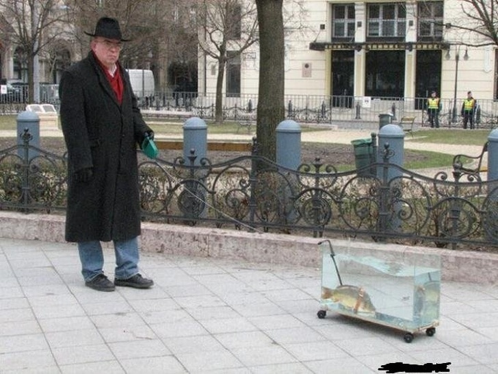 рыба на прогулке