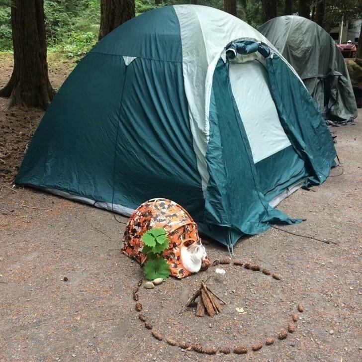 палатка для кота