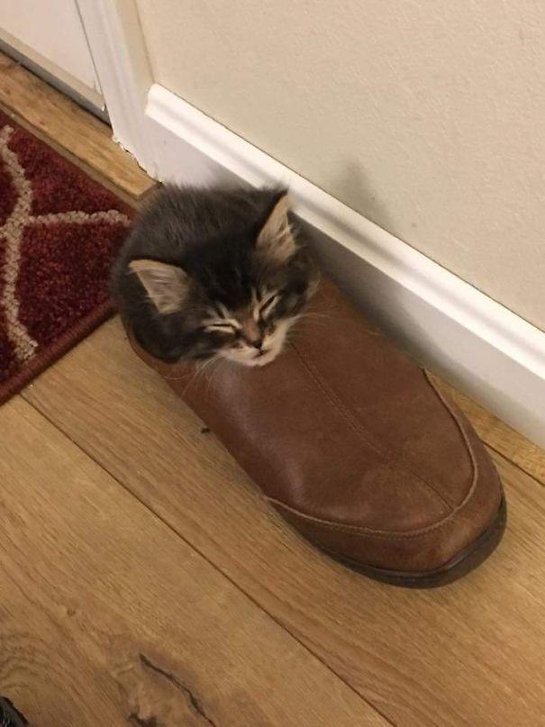 котенок спит в ботинке