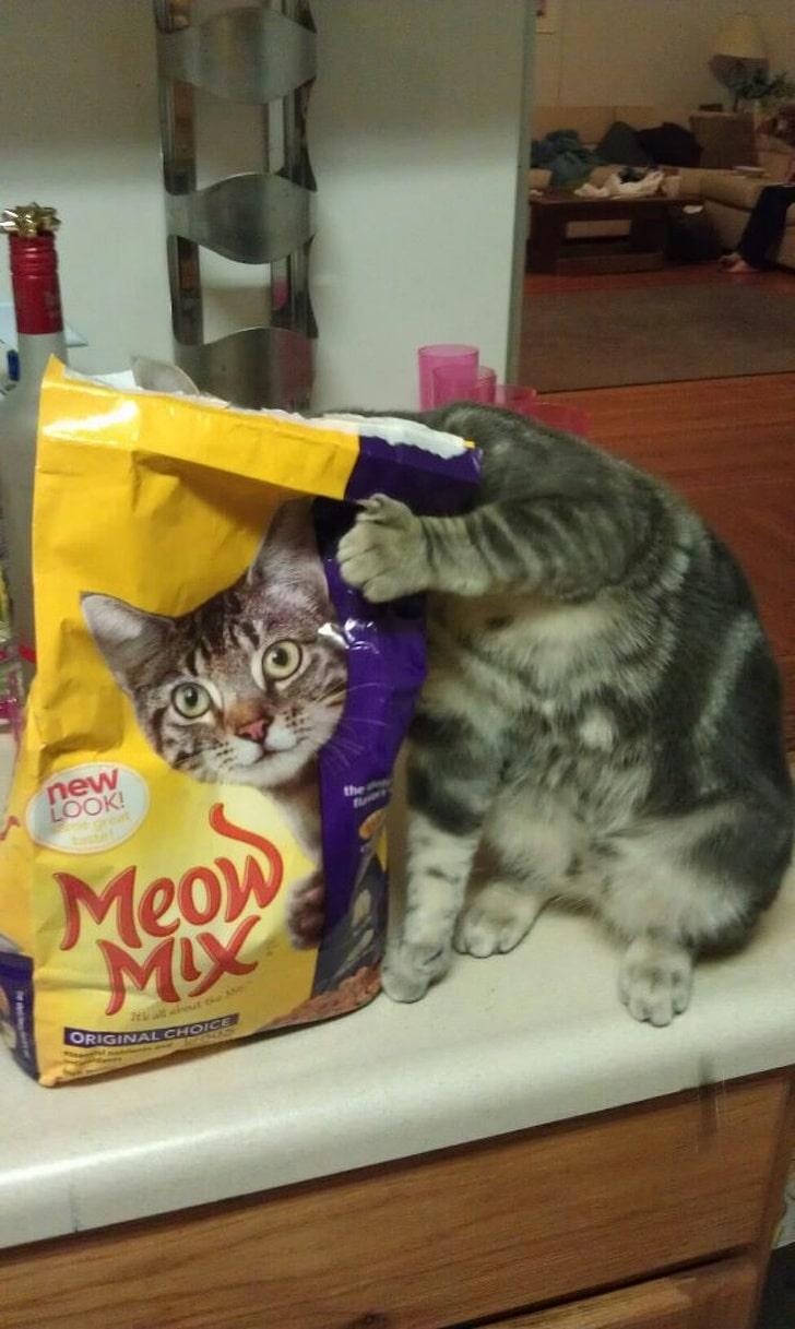 корм кота