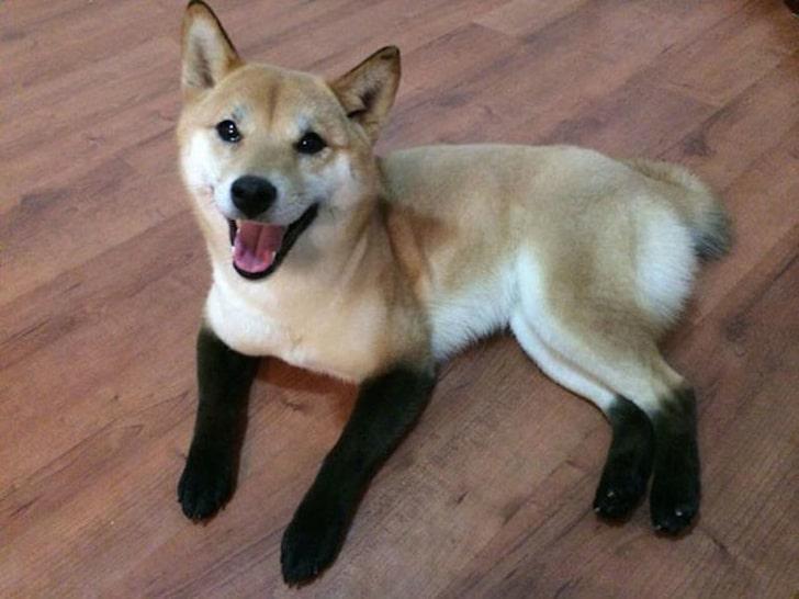 собака в носочках