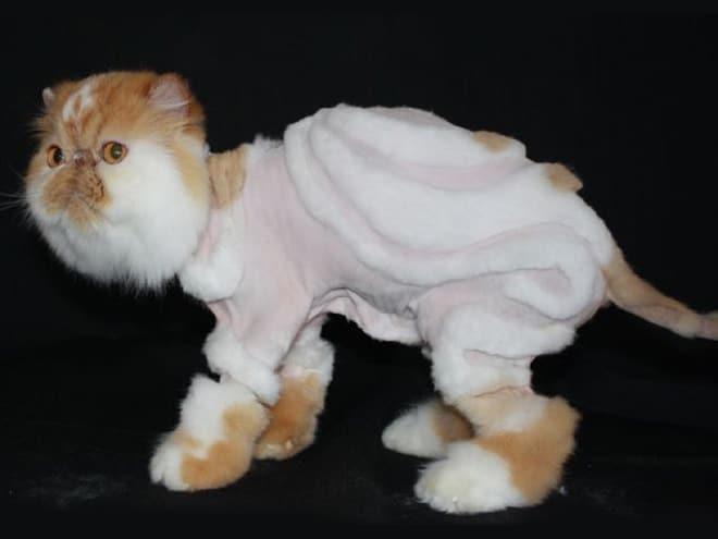 постриженный кот
